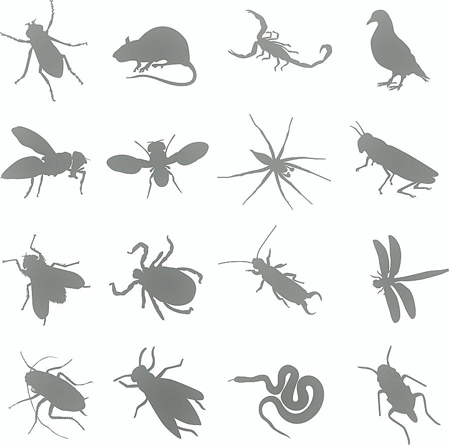 Pinnacle Pest Control Culprits
