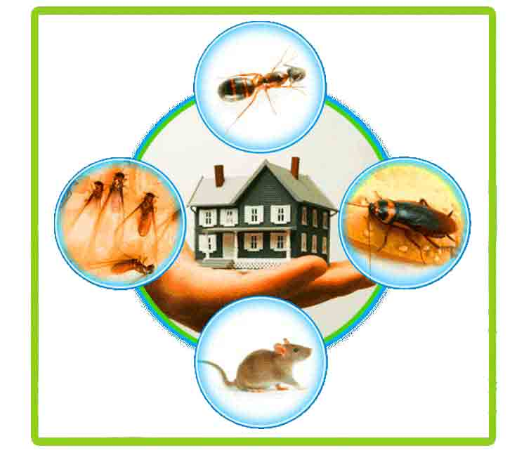 Pest Control; protecting your building from potential harm - Pinnacle